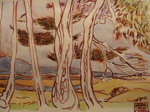 Blue-Gum Eucalyptus