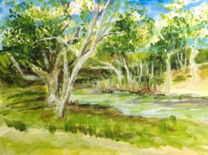 Springtime along Salado Creek, Texas.  Copyright April 2013 Robin L. Chandler