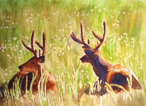 Young deer in the Santa Cruz meadow. Copyright 2013 Robin L. Chandler.