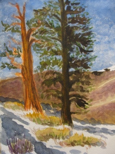 Ancient Bristlecone Pines on the White Mountains. Copyright Robin L. Chandler 2013