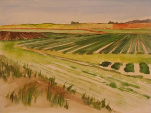 Strawberry fields along San Andreas Road. Copyright Robin L. Chandler 2014