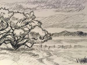 Sketch of a Coastal Live Oak in the UC Santa Cruz meadow. Robin L. Chandler, Copyright 2015.