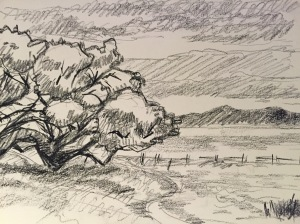Sketch of a Coastal Live Oak in the UC Santa Cruz meadow. Robin L. Chandler, Copyright 2015.
